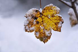 gold and brown leaf with snowflakes covering edges
