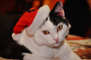 black and white cat in a santa hat