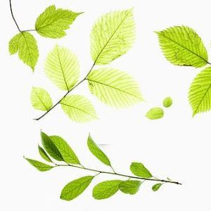 various types of leaves