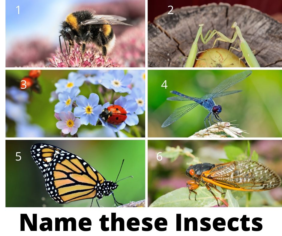 name these insects