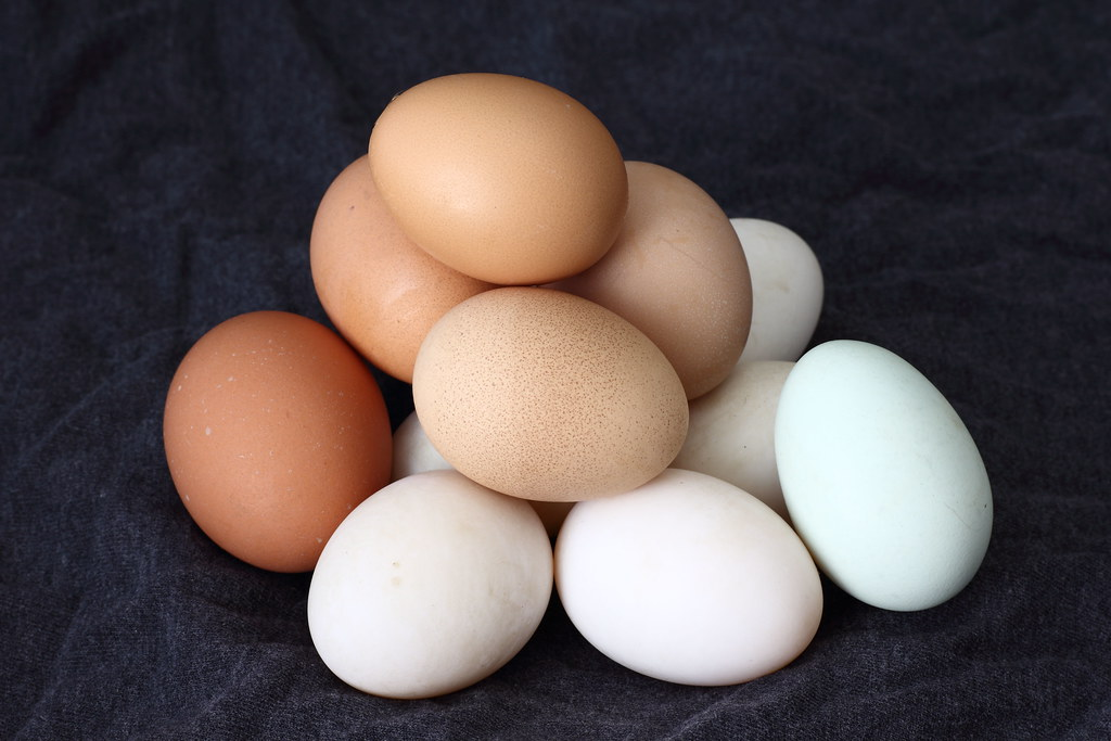 chicken eggs of various shades of white and brown