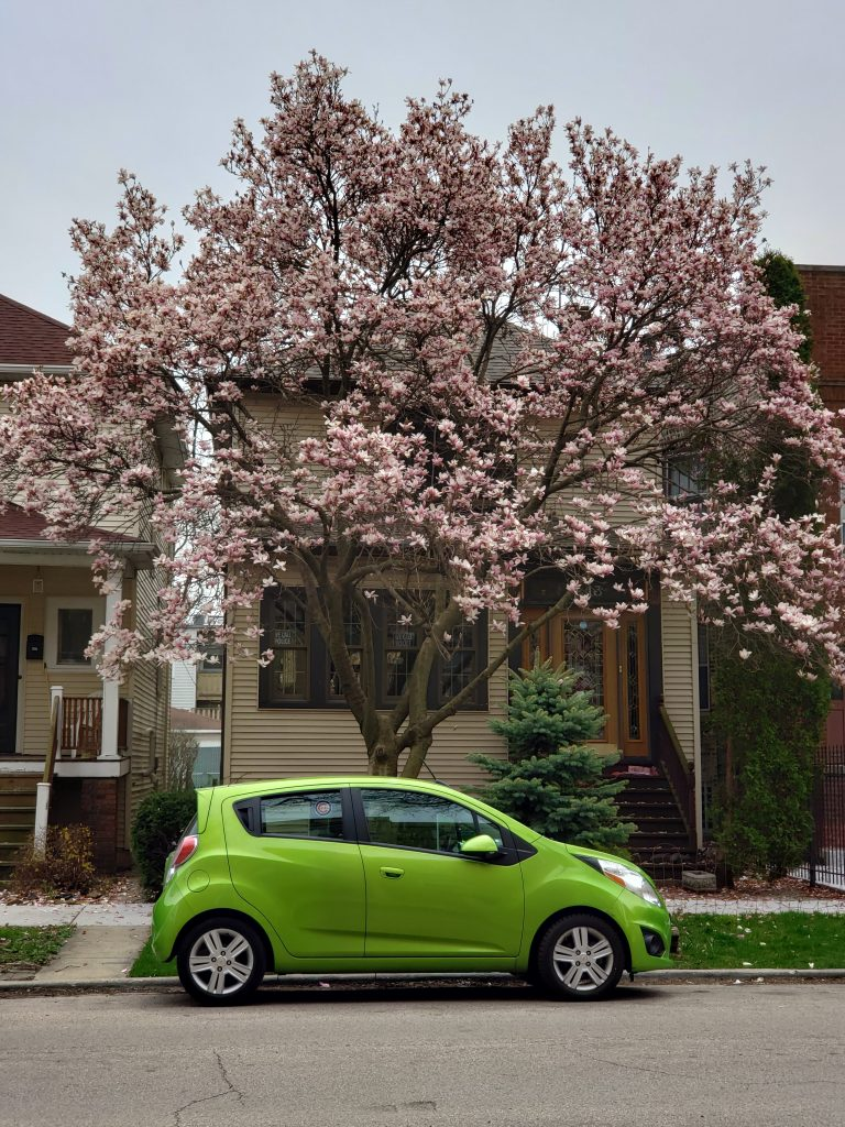 bright green car parked in front of a cherry blossom tree